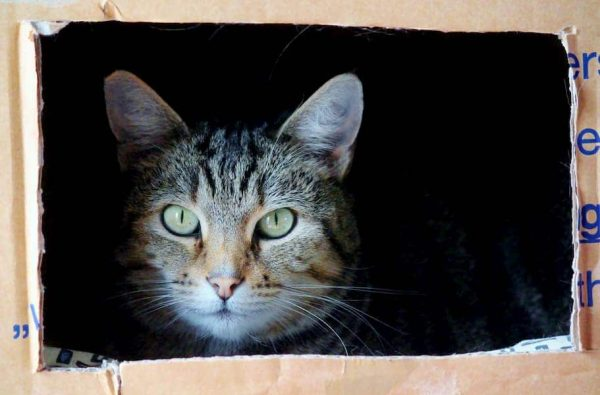 EsquireBlog-51-Useful tips for moving house with pets